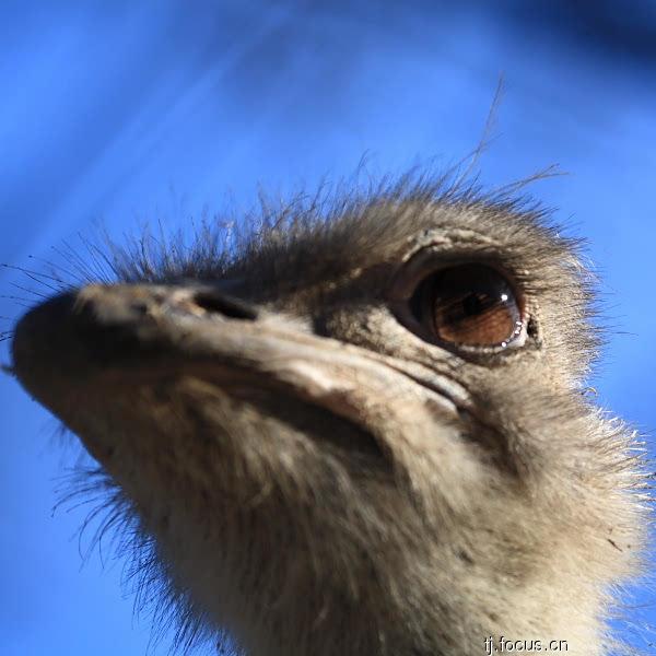 在动物园里面对铁栅栏后面的鸟兽的眼睛,无奈,失落,困惑,疲倦