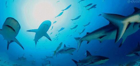 壁纸 动物 海底 海底世界 海洋馆 水族馆 鱼 鱼类 488_231