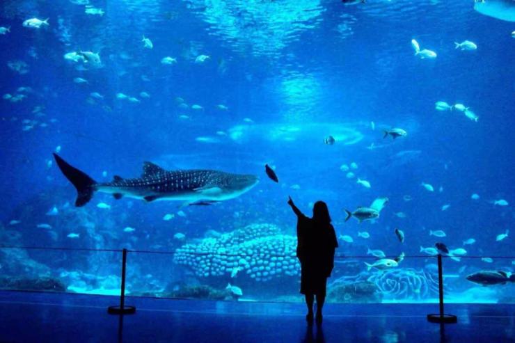 壁纸 海底 海底世界 海洋馆 水族馆 桌面 740_493