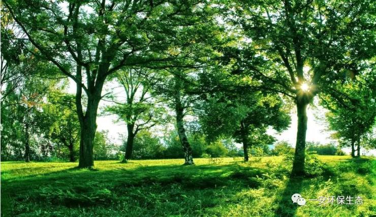 植树节是按照法律规定宣传保护树木,并动员群众参加以植树造林为活动内容的节日,鼓励人们爱护树木,具有重要的生态价值。按时间长短可分为植树日、植树周和植树月,共称为国际植树节。中国作为文明之国,自古便有在清明节种树的传统,万物生长此时,皆清洁而明净,以此来抚慰对逝者的悲痛思念,并将来年的希望寄托于片片绿色之中。1915年,凌道扬和韩安、裴义理等林学家深感国家林业不振,重山复岭,濯濯不毛,遂在孙中山先生的倡议下,定每年的清明节为植树节,后为纪念孙中山先生,将其逝世日,即3月12日定为植树节。