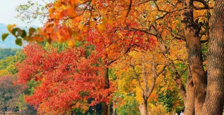 落叶风景图片最美