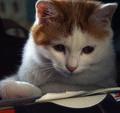 家有可爱猫