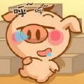 宝宝—宝宝猪