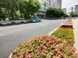 """天水市""""秦州第一街""""提改换新颜 美化街景彰显城市品位"""