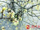 春节假期前半段天气让人欢喜 初三开始大幅降温