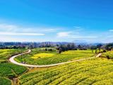 高黎贡山下的花海,蔓延出中国最美的田园牧歌