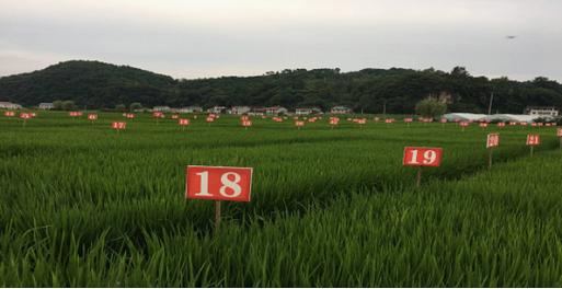 带你探索汇鑫大米的生长地——中国大硒谷慈利县