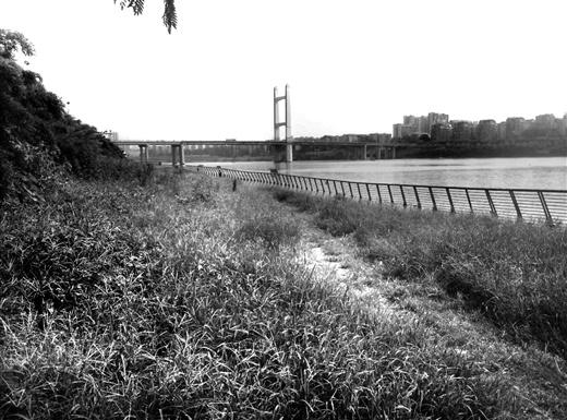 """柳州在水一方人工沙滩变""""草滩"""""""