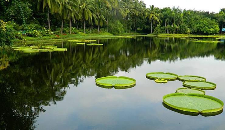 """住在云南""""亚马逊""""热带森林是一种怎样的体验?"""