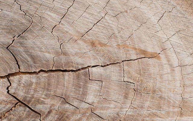 如何预防木头开裂?