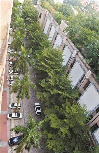 東莞停車位收費漲了 但車位售價仍平穩!車位該買還是租?