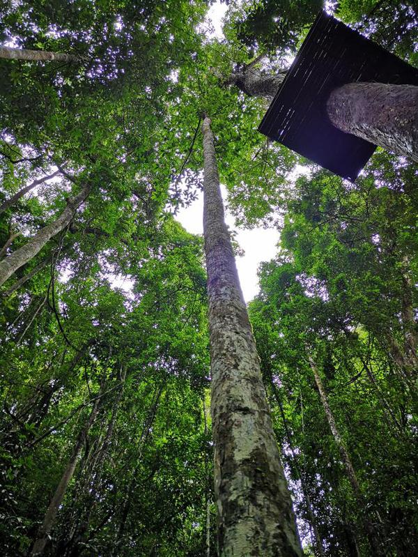 西双版纳的热带雨林