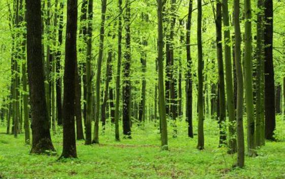万亩森林公园,绿色生态永清