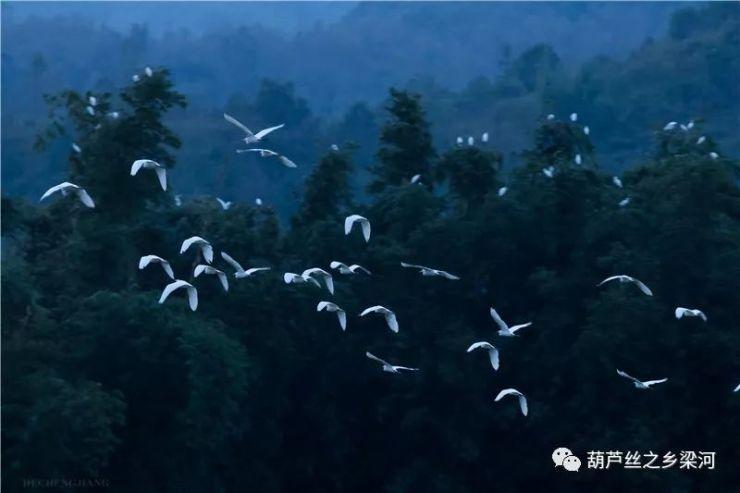当阳光城·君山墅遇到白鹭,瞬间美成一幅画