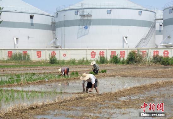 中国粮企寻求进口多元化 南美大豆成新宠